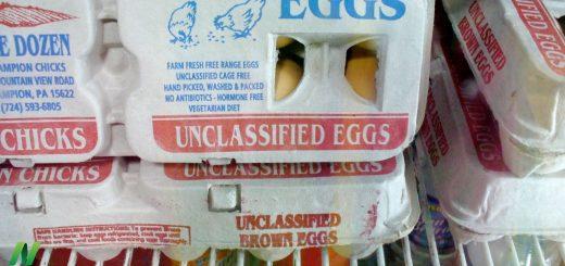 Debunking Egg Industry Myths