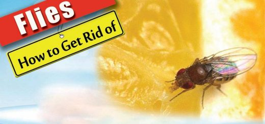 How To Get Rid of Flies – Health Benefits 2016